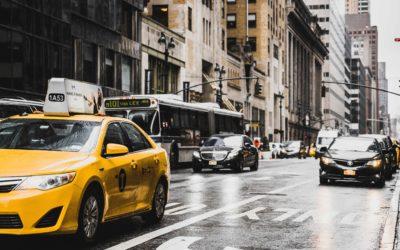 O czym klient powinien pamiętać przy przewozie zwierząt taksówką miejską?